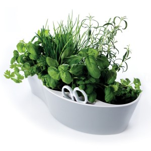 Herb-Garden-Verwendung[fusion_builder_container hundred_percent=