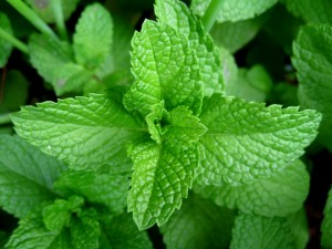 Mint-leaves-2007[fusion_builder_container hundred_percent=