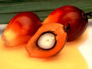 palmoil[fusion_builder_container hundred_percent=