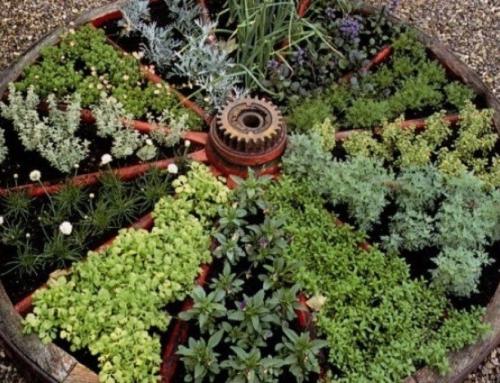 Fűszerkert – a fenntartás